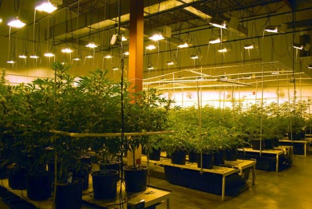 Ohio medical marijuana grow licenses would be capped at 18, cost $200,000