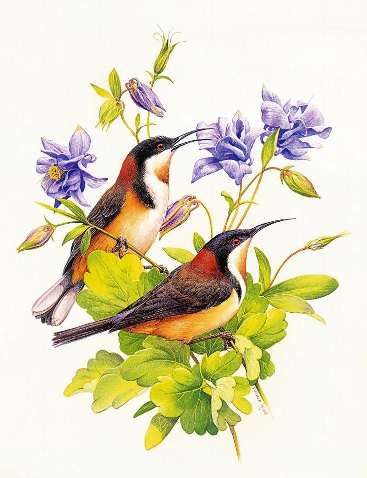 Живописные птицы.... Обсуждение на LiveInternet - Российский Сервис Онлайн-Дневников