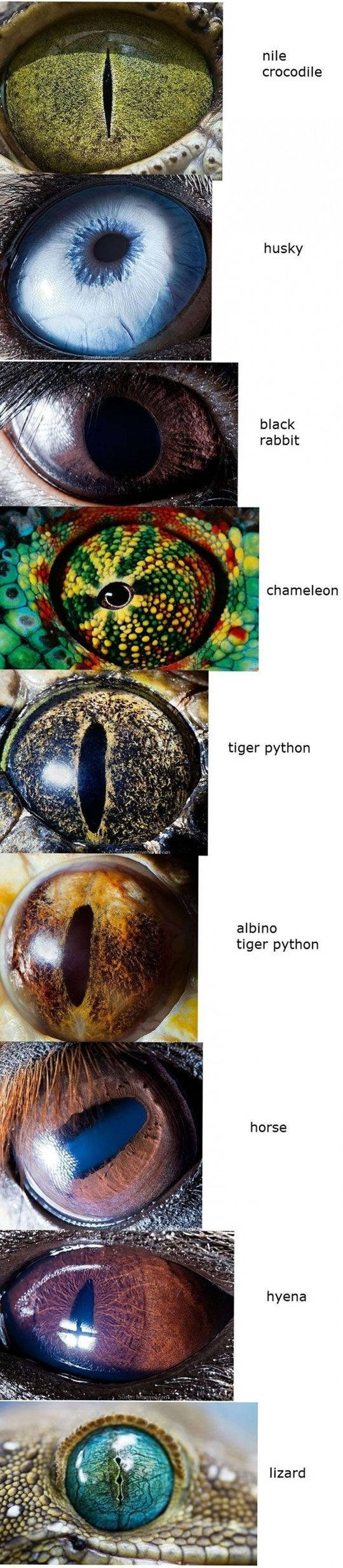"""Animal eyes....talking about eyes, there's a  Good point in the February Awake 2013 magazine, """"A designer of robots explains his faith""""."""
