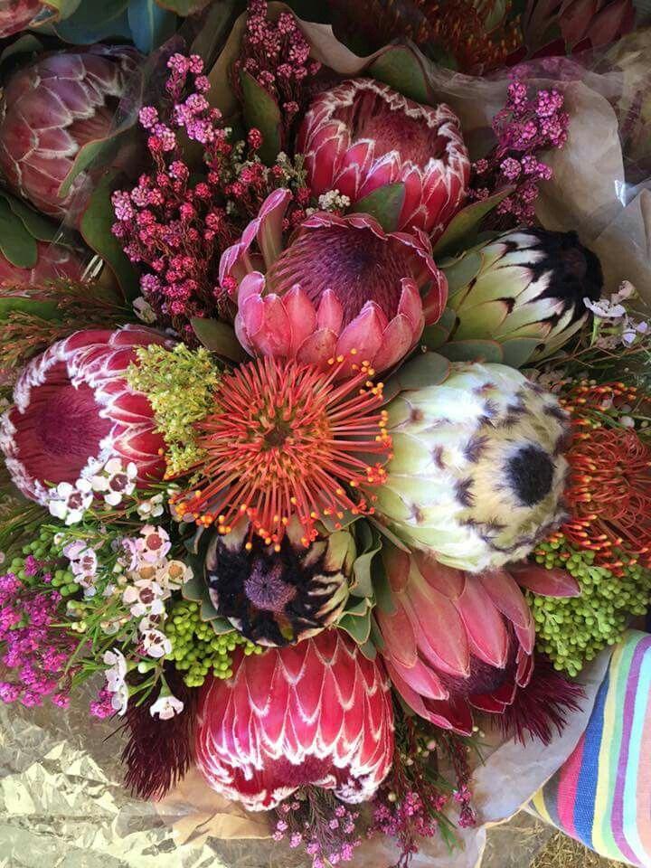 Protea Bofberg Flowers Bloemfontein. RSA.