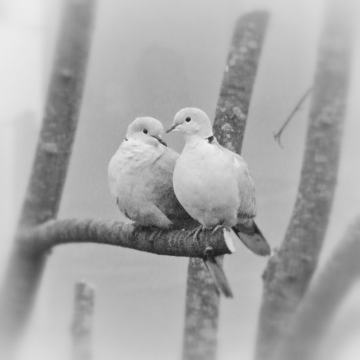 Photograph Sweet doves by Emanuele Rosi on 500px