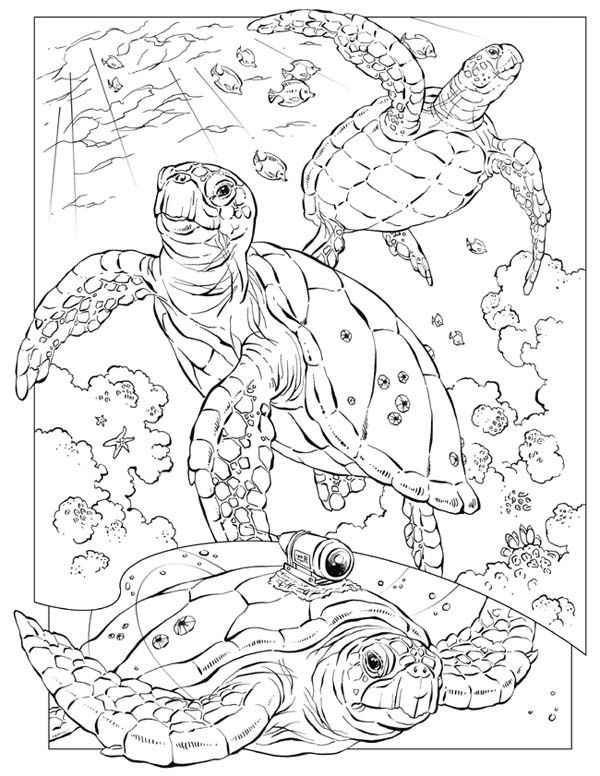 Sea Turtle, : Sea Turtle Documentary Coloring Page