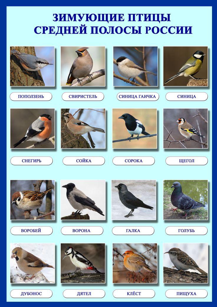 возле птицы беларуси картинки и названия девочки
