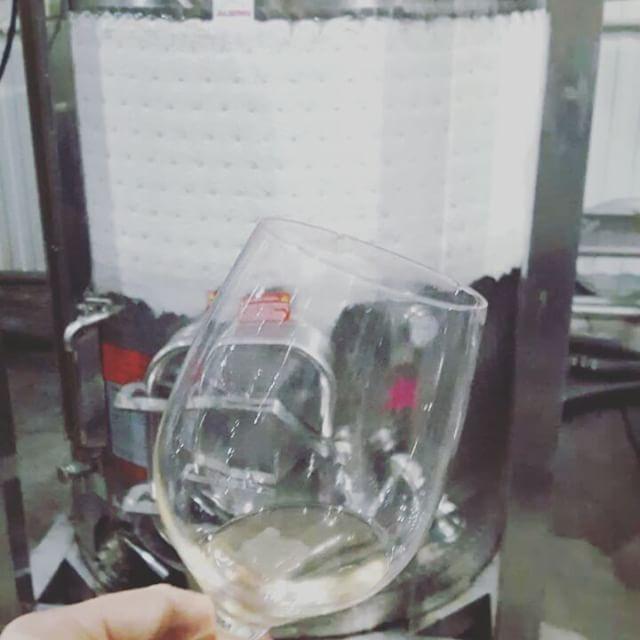 Мы пошли в вечерний заход. Поздняя дегустация на Вилле Виктория. Здесь начинается новый этап - женский. За вино здесь теперь отвечает женщина. В будущем году  будет гораздо меньше полусухих и полусладких вин с остаточным сахаром. Например Пино Гри и Пино Нуар розе будут сухими. Мы сегодня попробовали все из ёмкостей и у меня уже появилось вино, которое я буду ждать с нетерпением - клубничный Пино Нуар. Ну прям розе- конфетка. Девочки! Вино для нас! #виллавиктория @villavictoria2009…
