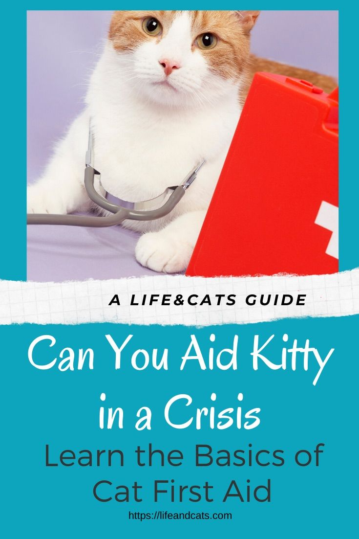 Could You Aid Kitty In A Crisis Cat First Aid Tips Life Cats First Aid Tips First Aid Wound Care