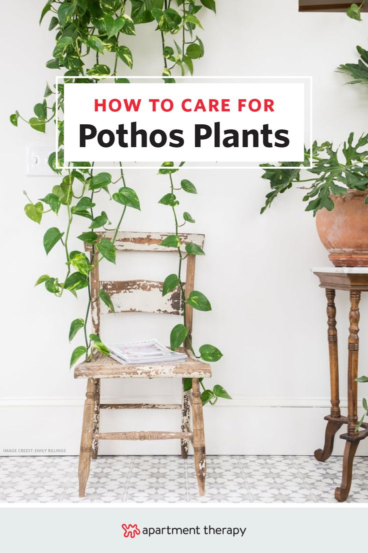 This plant is so easy to care for it 39 s stupid pothos for Easy plants to care for