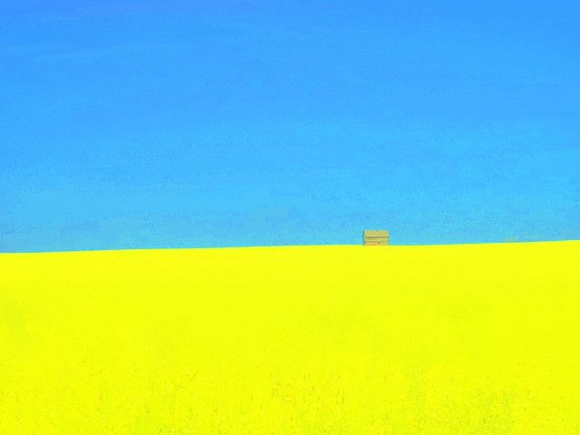 Canola field in Saskatchewan. This is not a painting. Amazing. It is almost the flag of Ukraine .