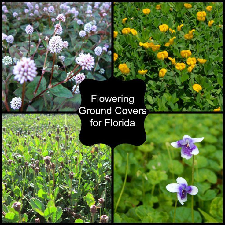 Garden Ideas To Replace Grass