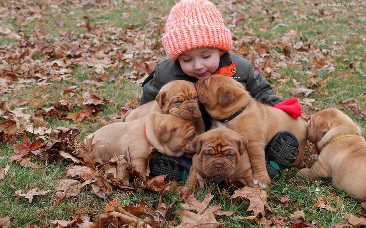 Dziecko, Pieski, Szczeniaki, Dog de Bordeaux