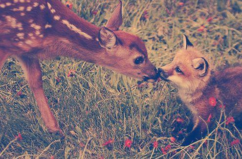 bambi <3 fox