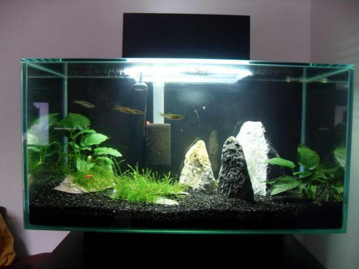 dcor ideas for aquarium lamp with lighting httpmodtopiastudiocom - Freshwater Aquarium Design Ideas