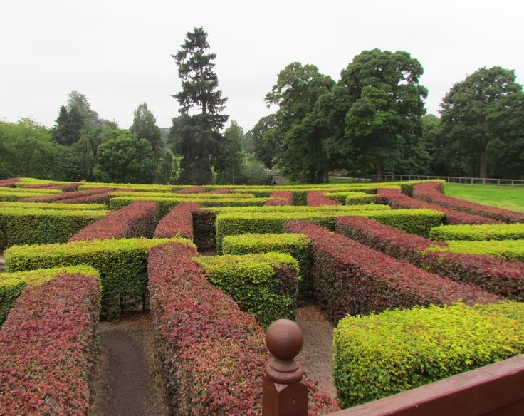 The maze in the grounds of Scone Palace