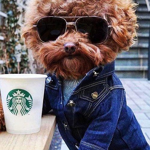 Hipster Dog http://ift.tt/2o9blyy