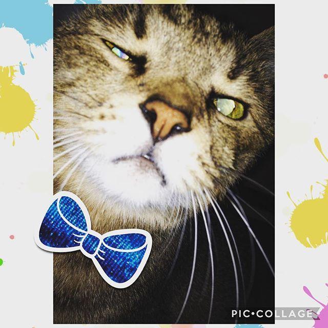 おはようございます☀ 起こしに来てくれた猫が可愛くて、、、と、思ったら。笑 こんなショットに😂😂 . . #新作コスメ #朝活 #DIY #フォロー #相互フォロー #フォロバ #followme #節約 #アパレル #貧乏 #主婦 #歯科衛生士 #ツムツム #社会人1年目 #企業女子 #転勤 #ユニクロ #海外旅行 #セルフネイル #カフェ #一人暮らし #春服 #20代 #23歳 #介護士 #独身女子 #新社会人 #内定式 #引越し #新生活