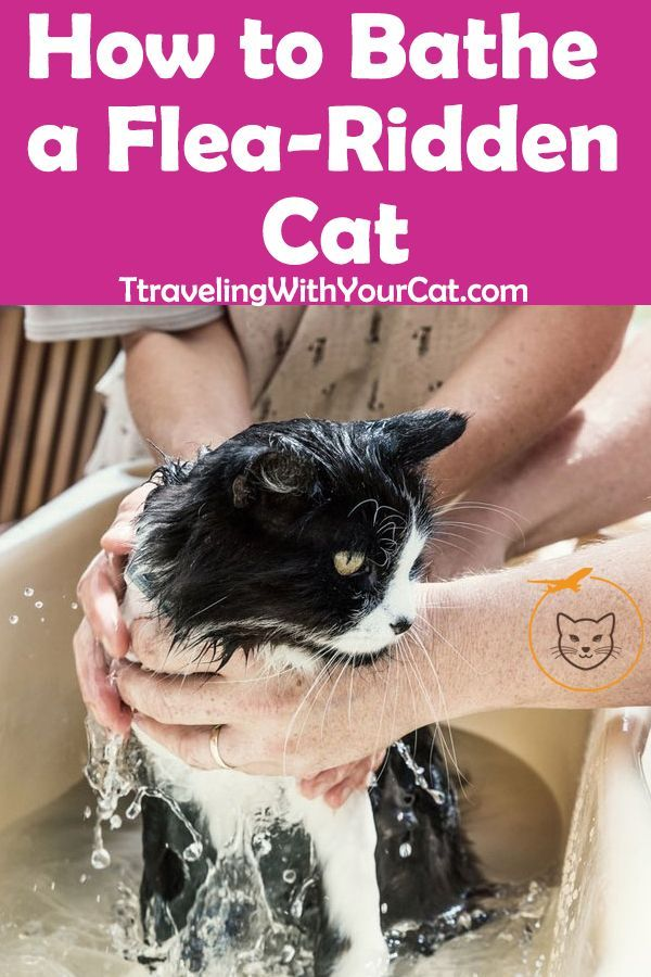 The Best Way To Bathe A Flea Ridden Cat Is To Plan Beforehand So The Bath Can Be As Short And As Stress Free As Possible Cat Fleas Flea Bath For Cats