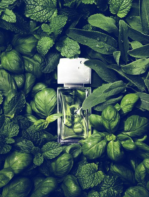 Unknown perfume but the photoshoot is amazing. I can even feel the smell of grass and mint. It should be very soft and fresh.