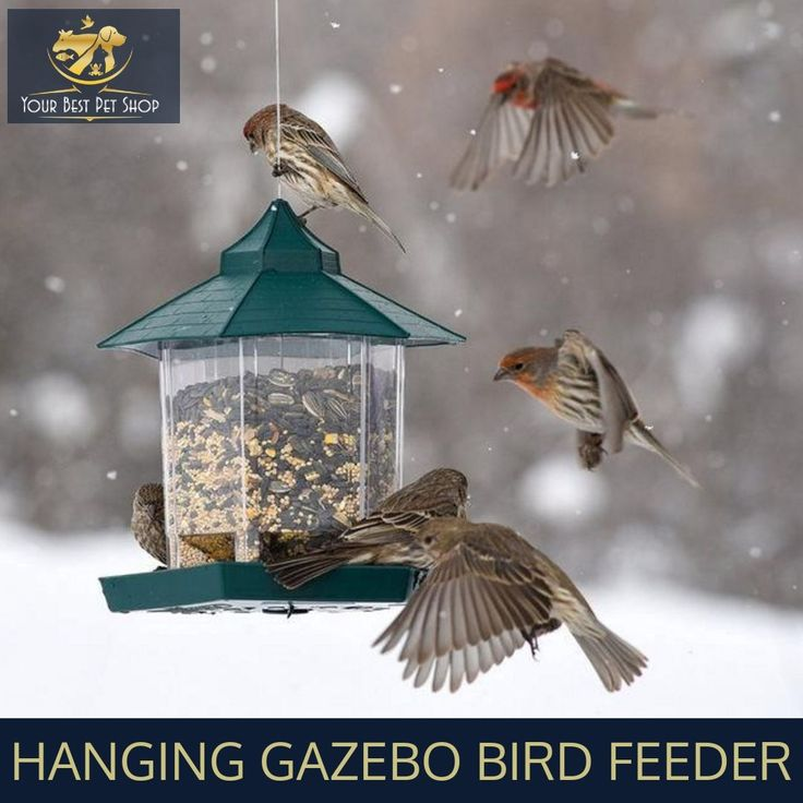 Hanging Gazebo Bird Feeder is a refreshing place for birds to eat and relax on a hot summer day.  This gazebo will invite a plethora of bird varieties into your yard, allowing you to enjoy watching birds from your window, back deck and patio.  Buy now !!  #Birds #PetCare #PetSupplies #Birds #WayBackWednesday #BirdFeeder #LoveForPets #Gazebo