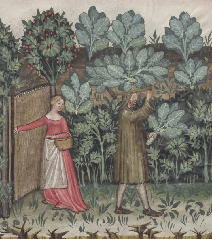 Man and woman during the harvest of cabbage - Caules | Österreichische Nationalbibliothek - Austrian National Library | Public Domain