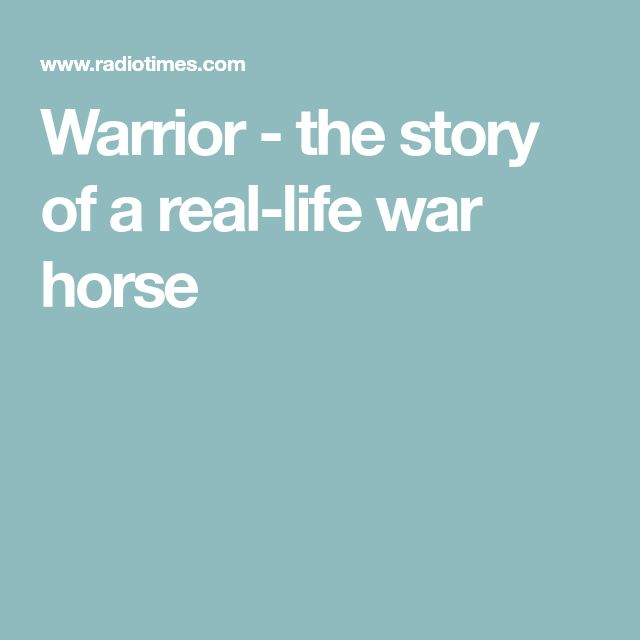 Warrior - the story of a real-life war horse