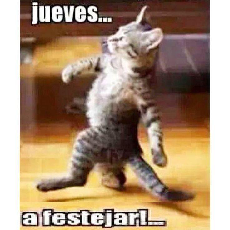 Uno que ya empieza la juerga en #jueves... Buenos días y feliz jueves  #gato #gatos #gatito #gatitos #cat #cats  #cachorro #cachorros  #nice #funny #gracioso #love #amor #amigos #friends  by almudena1525