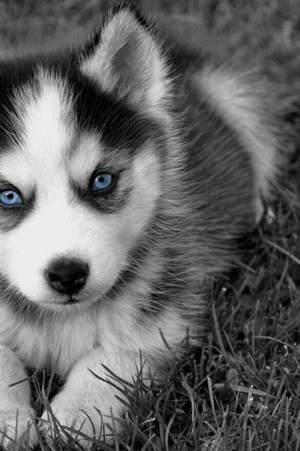 I love how they have blue eyes!