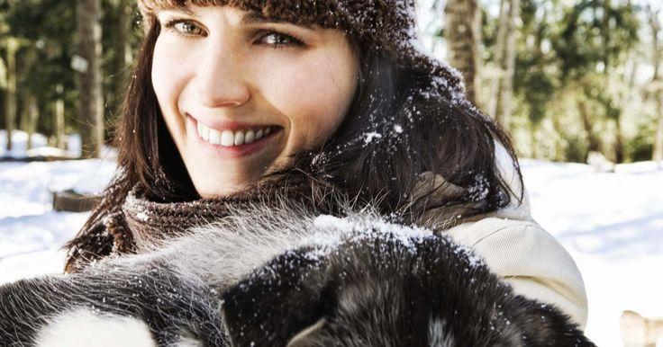 Lista de cães que parecem com um husky siberiano. Huskies siberianos proporcionam companhia para os seres humanos, tanto como um animal de estimação como cão de trabalho. Estes cães de trenó têm a pele branca adornada com marcações cinza ou bege. De tamanho médio com uma camada densa de pele grossa, o husky se originou em climas frios, bem como vários cães com os quais compartilha uma semelhança ...