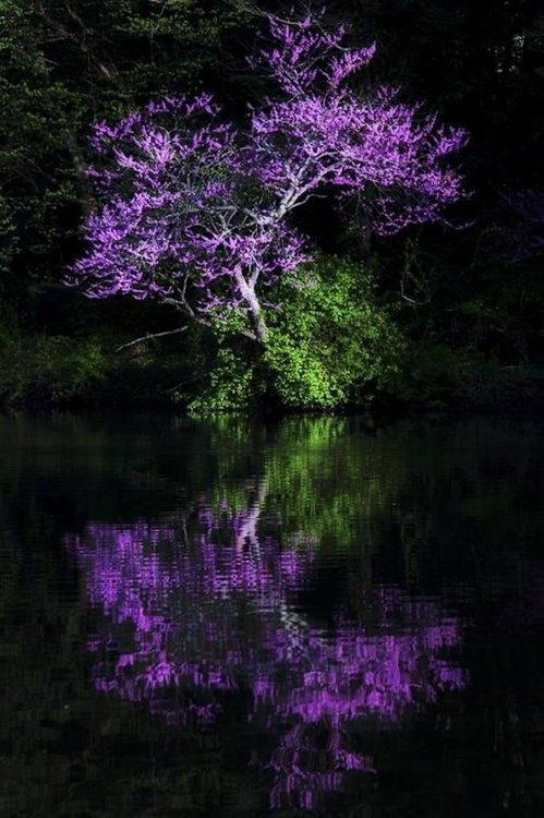 Beautiful nature picture. Water makes its own art. Catsmoonsandmagick