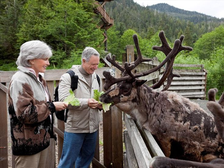 8 Night Completely Packaged Alaskan Vacation http://www.unforgettable.cruises/packages/consumer_view/1877/from:packages/destination_id:14#utm_sguid=172107,e76feb5f-7f13-7b85-05ac-1efcec9af234 Includes: Transfers from Seattle-Tacoma International Airport (SEA) to Hotel 1 Night at Hampton Inn & Suites Seattle-Airport (or similar) Transfers to Ship 7 Night Explorer of the Seas Alaskan Cruise