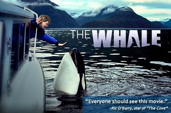 The whale movie. The incredible true story of Luna the whale. So touching. It will bring you to tears