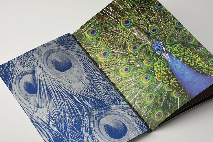 #Majestic #visualbook #peacocks - Find more about #Majestic http://www.favini.com/gs/en/fine-papers/majestic/features-applications/