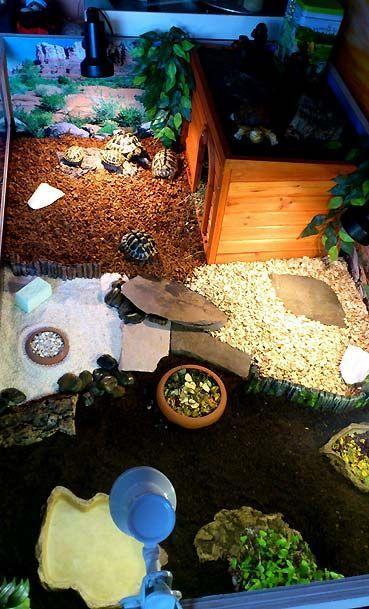 Terrarien für Landschildkröten