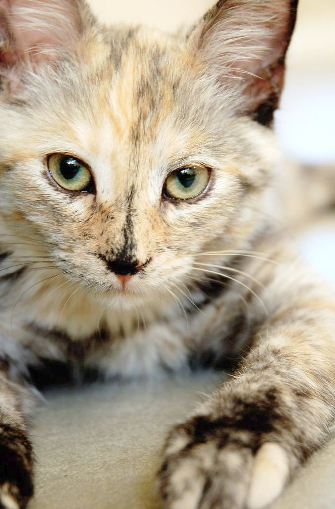 Beautiful Cats Wallpapers For Mobile Beautiful Cats For Sale In