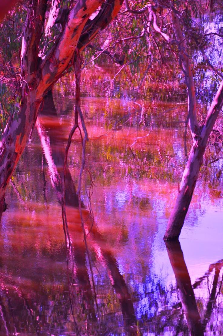 Coloured up flood on the Murray