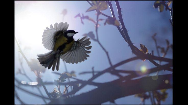 Joseph Amess, de 15 anos, foi o vencedor na categoria de fotógrafos de 12 a 18 anos, com essa impressionante foto de um chapim-real levantando vôo em Suffolk, no leste da Inglaterra. As imagens ganhadoras serão exibidas na Mall Galleries em Londres, do dia 2 a 7 de setembro antes de partirem para um tour nacional.