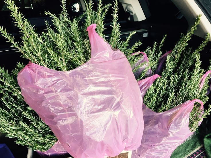 Bags of Rosemary cut for the local ANZAC day march. Car filled ready to deliver to organiser so they could be cut into sprigs to be worn at the services. #ANZAC100