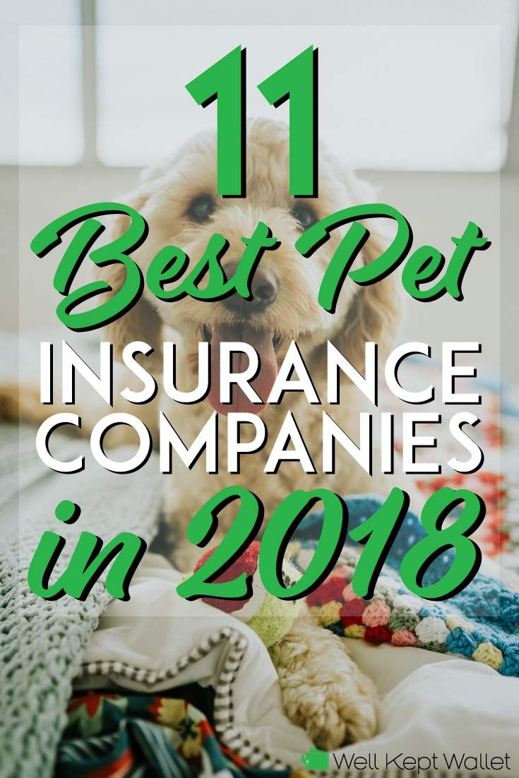 11 Best Pet Insurance Companies In 2020 Pet Insurance Best Pet