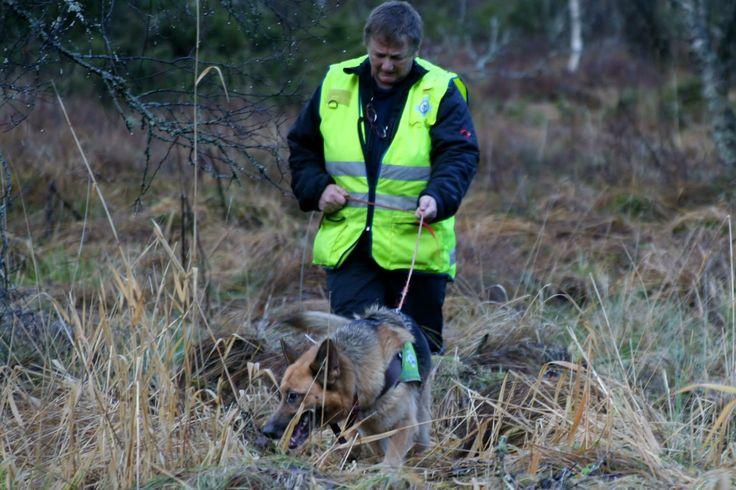 @NrhHordaland: 7 redningshunder på vei til Os - Norske Redningshunder - Aksjoner #redningshund #redningshunder @redningshunder  http://bit.ly/1M4cAsh