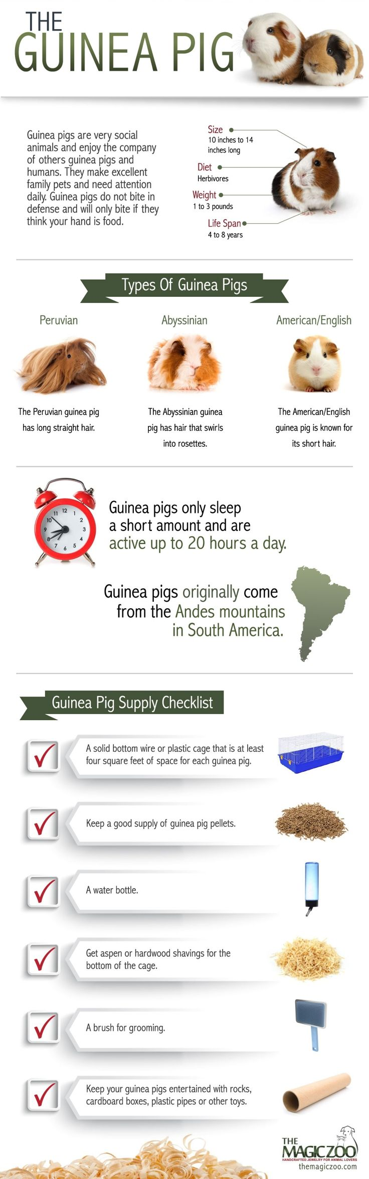 Here's some guinea pig trivia from one of my favorite animals. They inspire me as  the guinea pig artist over at http://www.themagiczoo.com/guinea-pig-jewelry.html