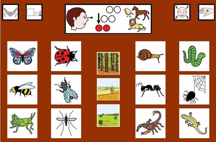Täältä löytyy runsas valikoima erilaisia kuvia. Lisää kuvia eläimistä https://fi.pinterest.com/mariluislgf/vocabulario-animales/