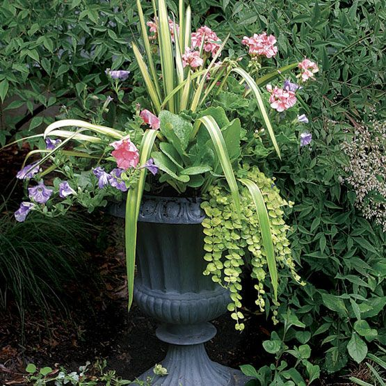 10 Plants for Year-round Containers from Fine GardeningPlants Can, Ideas, Plants For Pots, 10 Plants, Yearround Containersth, Outdoor Pots, Flower Gardens Design, Years Round Plants, Fine Gardens