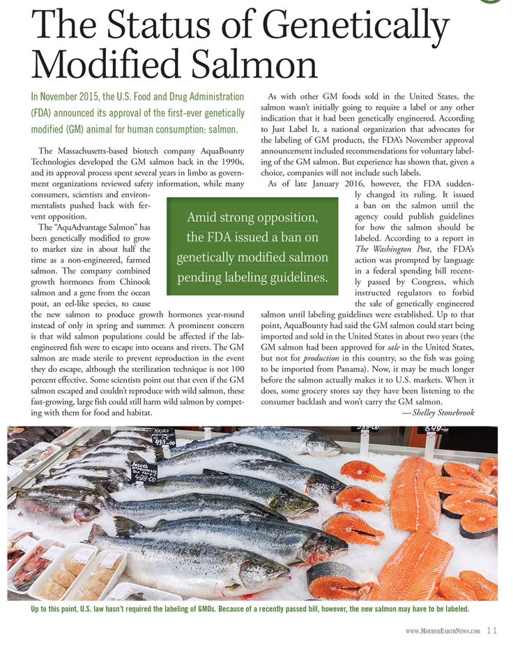 GMO Salmon Status