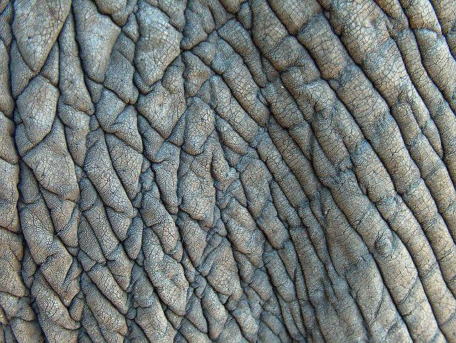 Textuur: olifantenhuid. Aan de foto kun je al zien hoe de olifantenhuid zal aanvoelen, ruw en hobbelig.