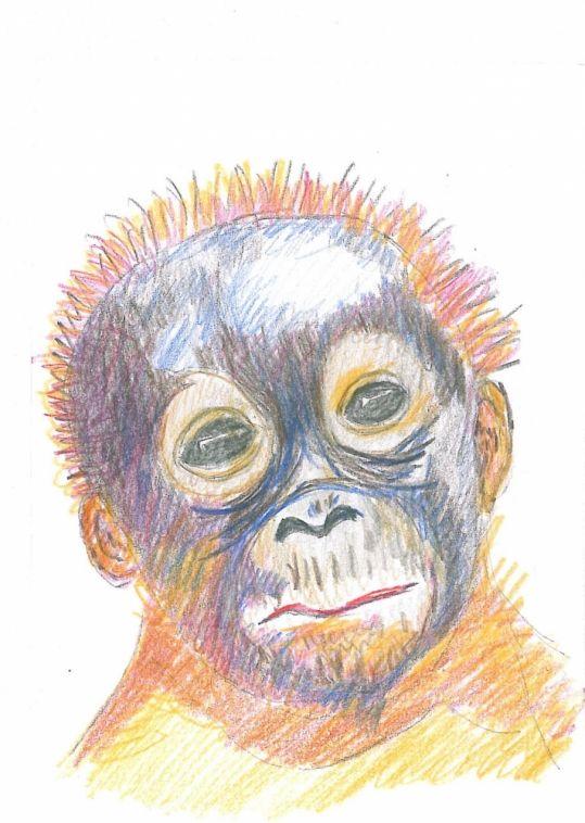 Orangutang unge, mørk.- http://www.amioamio.com/da/produkt/165514/