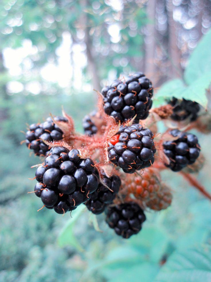 Yummy blackberries!