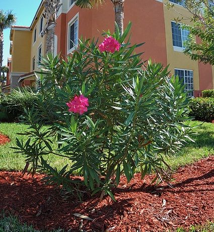 Great Landscape Trees For Hot Dry Climate Shade Amp Sun