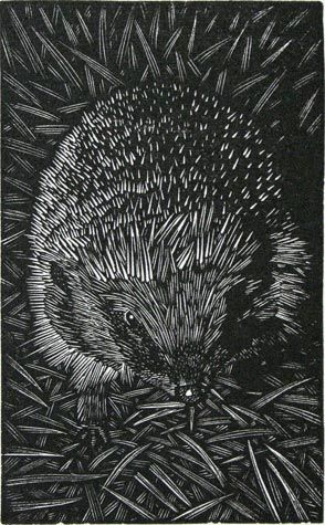 Andy English - Hedgehog