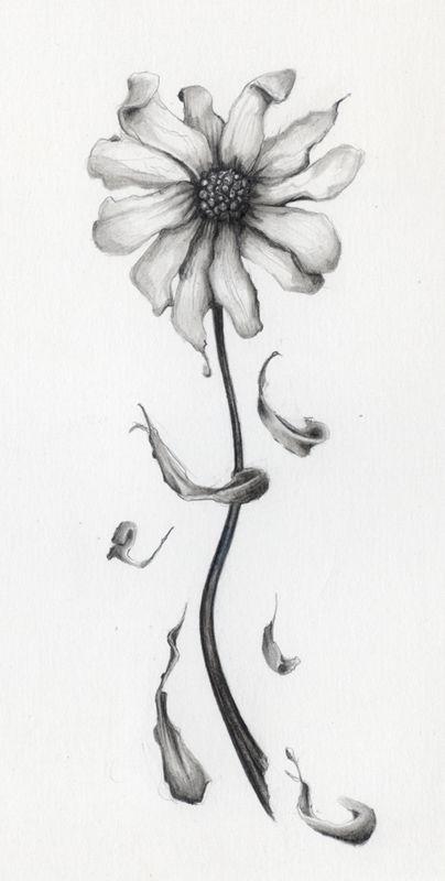Pencil Drawings Of Daisies