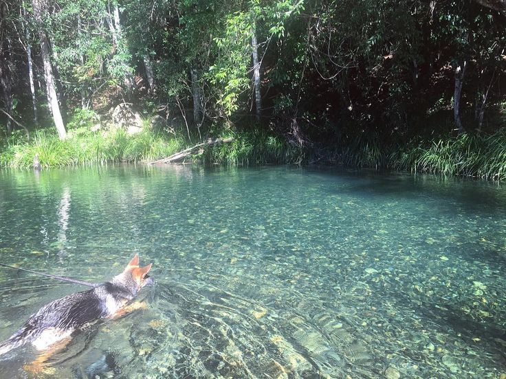 The promised land never never river bellingen  German shepherd Crystal clear water  See this Instagram photo by @sian____ • 348 likes