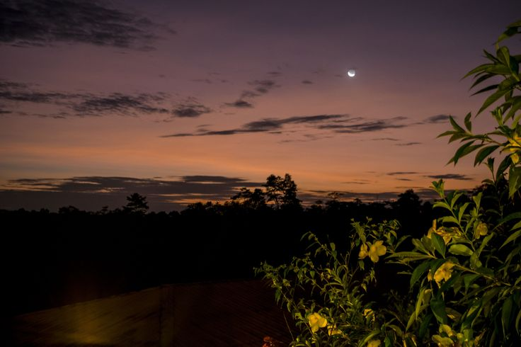 night at the amazon by julianacn_2008