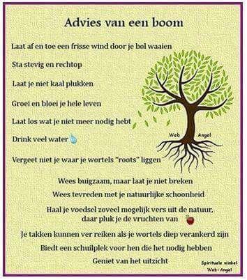 Advies van een boom....